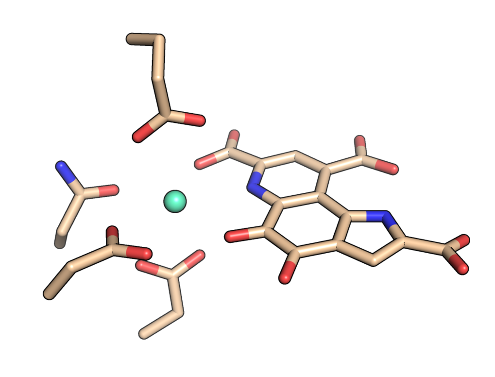 The cofactor europium at the active site of the protein MDH.